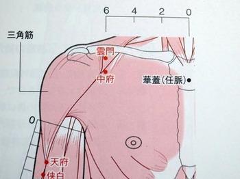 chuufu1.jpg